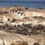טיול דרום אפריקה שמורת טבע