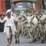 טיול פרטי להודו כביש
