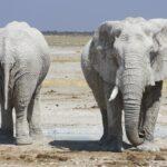 ספארי בטנזניה פילים