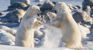 PolarBear_03
