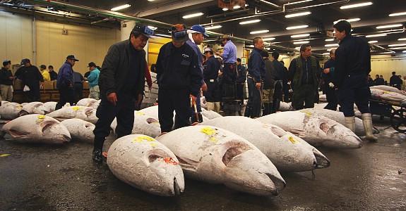 סשימי, מישהו? שוק הדגים צוקיג'י בטוקיו, יפן