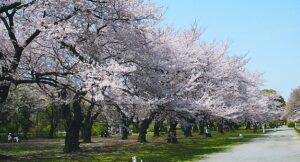 Tokyo-Koishikawa Botanical Garden1