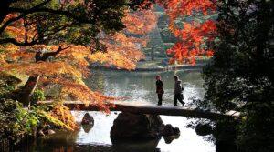 Tokyo-Rikugien Garden1