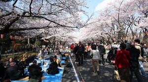 Tokyo-Ueno Park1