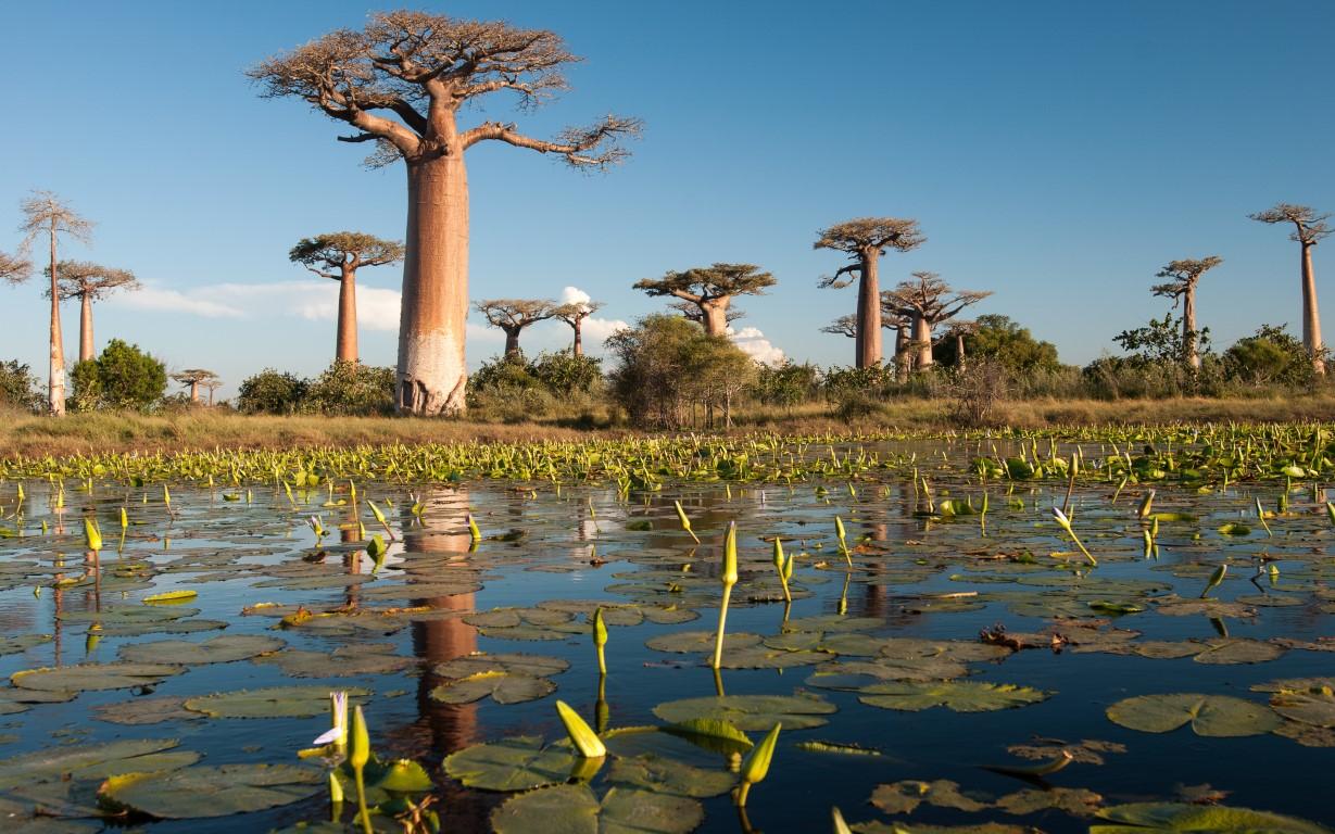 טיול מאורגן למדגסקר שמורת טבע
