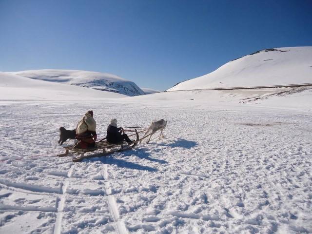 טיול פרטי צפון נורבגיה מזחלת שלג