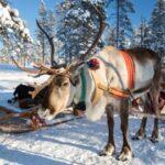 טיול פרטי צפון נורבגיה אייל שלג