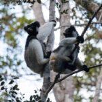 למורים טיול פרטי למדגסקר